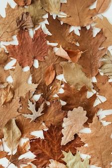 Autunno, composizione autunnale. bella di foglie secche marroni, arancioni, beige