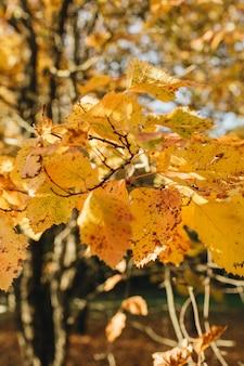 Composizione autunnale e autunnale. bellissimo paesaggio con foglie gialle