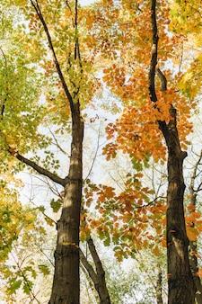 Composizione autunnale e autunnale. bellissimo paesaggio con alberi e foglie gialle, arancioni, verdi