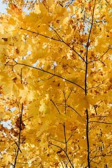 Composizione autunnale e autunnale. bellissimo paesaggio con alberi e foglie di acero gialle e arancioni
