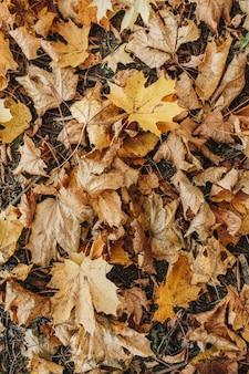 Composizione autunnale e autunnale. foglie d'acero beige