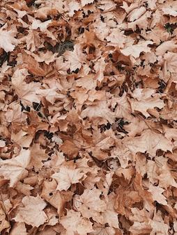 Composizione autunnale e autunnale. foglie di acero arancione colorate