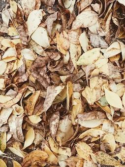 Composizione autunnale e autunnale. foglie colorate arancioni e gialle
