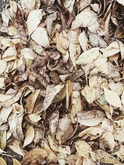Composizione autunnale e autunnale. foglie gialle secche
