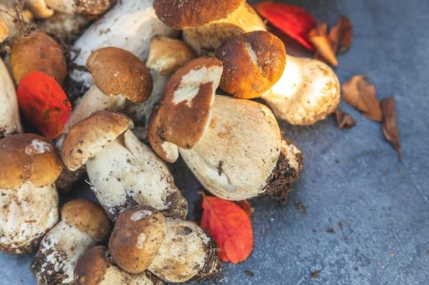 Composizione autunnale autunnale. funghi commestibili crudi penny bun su fondo di pietra scisto nero scuro. porcini sul tavolo grigio. cucinare deliziosi piatti gourmet a base di funghi biologici. disposizione piatta, vista dall'alto