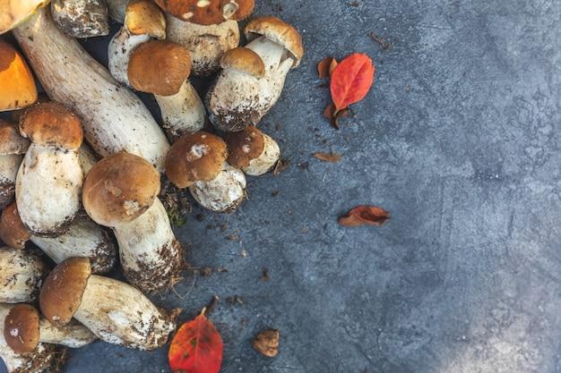 Composizione autunnale funghi commestibili crudi penny bun su fondo di pietra scisto nero scuro porcini ov...