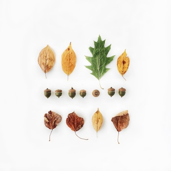 Autumn fall flat lay, top view disposizione creativa.