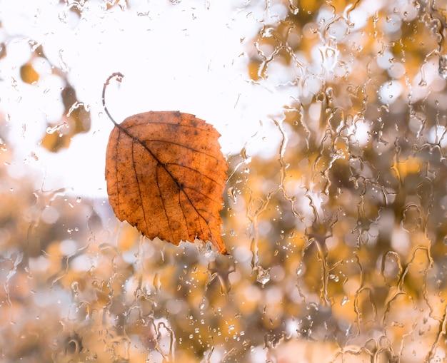 Foglia caduta autunno sulla finestra di vetro bagnato con gocce di pioggia