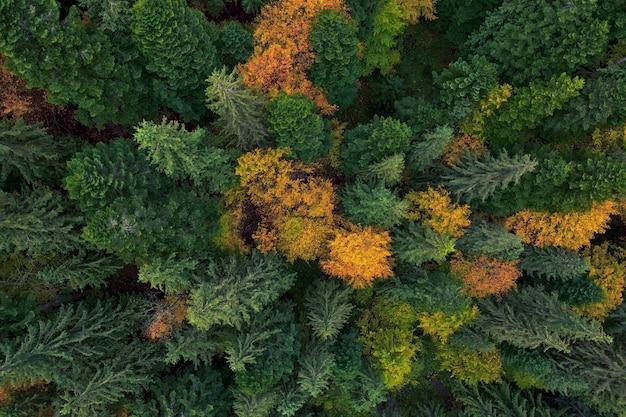 Vista aerea della foresta di autunno, alberi gialli e verdi. sfondo o trama.