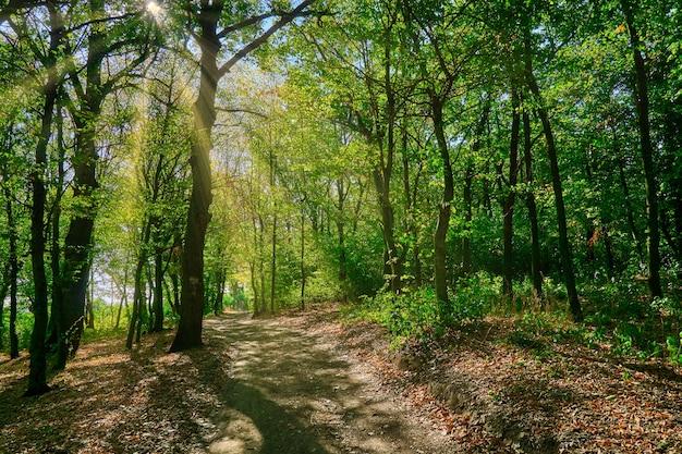 Scenario di foresta autunnale con raggi di luce calda che illuminano il fogliame dorato e un sentiero