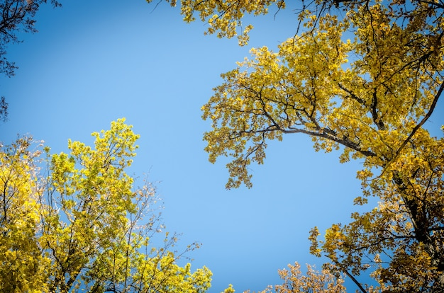 Cielo autunnale della foresta