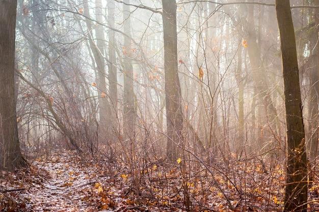 Bosco autunnale con alberi spogli e nebbia mattutina_