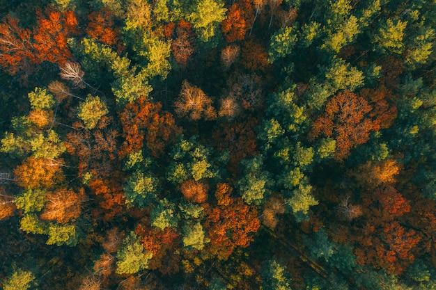 Foresta di autunno con la vista superiore dei bei alberi