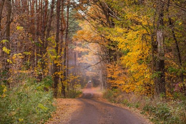 Bosco autunnale con foglie arancioni e rosse. foresta con tanto sole caldo. priorità bassa orizzontale di autunno
