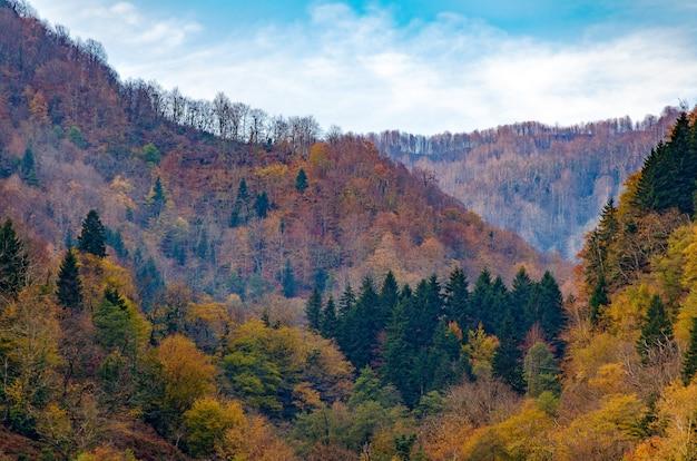Foresta d'autunno con alberi gialli nelle colline. autunno luminoso, cambio di stagione.