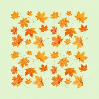 Biglietto di auguri autunnale con bellissime foglie autunnali gialle di acero