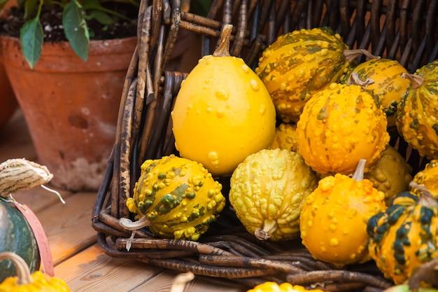 Sfondo raccolto autunnale con piccole zucche decorative sul tavolo