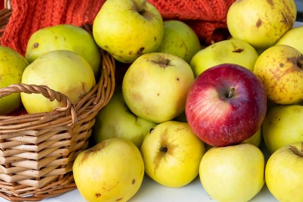 Raccolto autunnale concetto autunnale mele gialle nel cesto sfondo chiaro messa a fuoco selettiva vista dall'alto