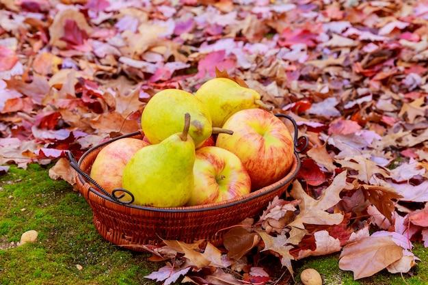 Raccolto autunnale. pere, mele, uva e foglie gialle sul tavolo di legno