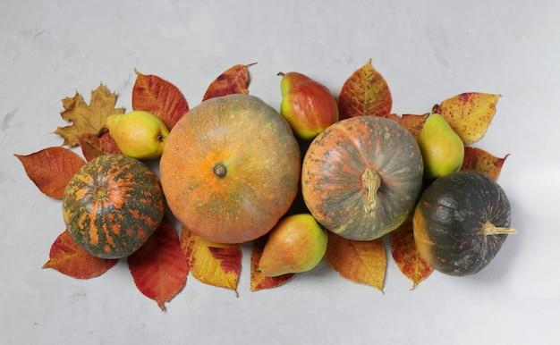 Vendemmia autunnale: zucche, pere e foglie multicolori su grigio. centrotavola giorno del ringraziamento. vista dall'alto