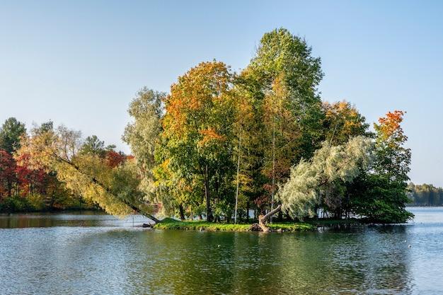 Isola di autunno con alberi in crescita storti