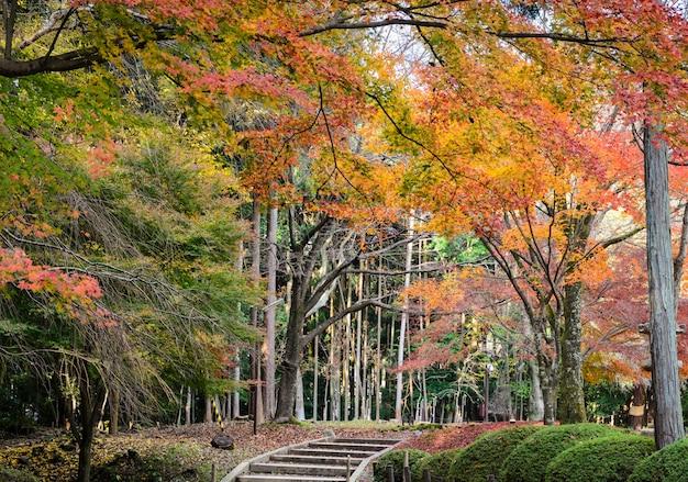 Giardino giapponese d'autunno nel tempio di daigoji. kyoto, giappone