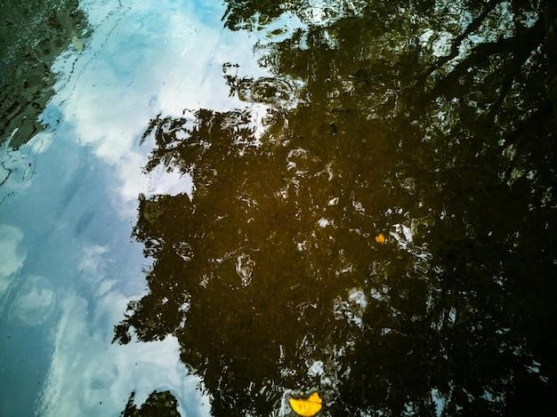 L'albero autunnale sullo sfondo del paesaggio autunnale si riflette in una pozzanghera dopo che le foglie cadute gialle della pioggia giacciono