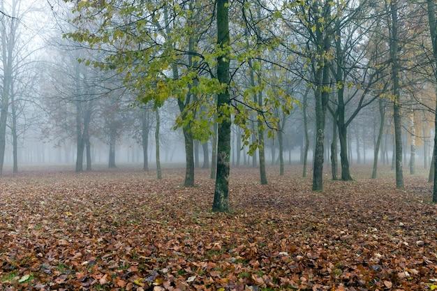 Paesaggio autunnale in una foresta con alberi in tempo nuvoloso, una mattina nebbiosa
