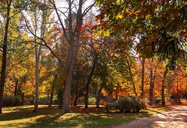 Paesaggio autunnale in un parco con alberi con foglie d'oro.