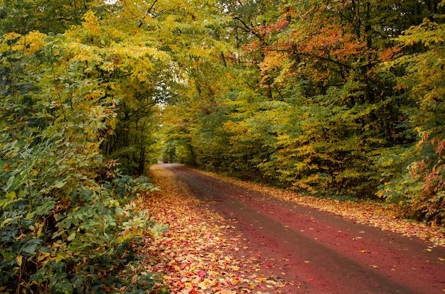 Paesaggio autunnale con fogliame colorato caduta di alberi
