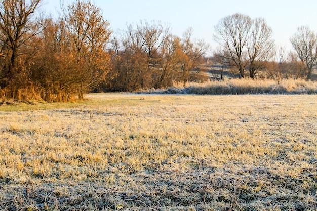 Paesaggio autunnale con alberi e ampio prato coperto dalla prima brina