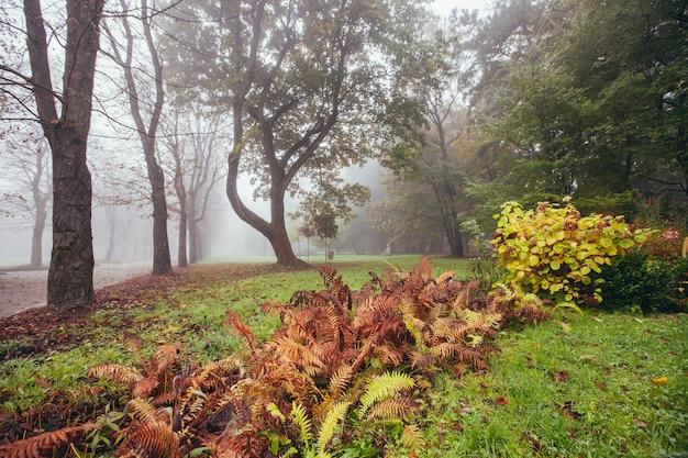 Paesaggio autunnale, alberi gialli nella nebbia mattutina