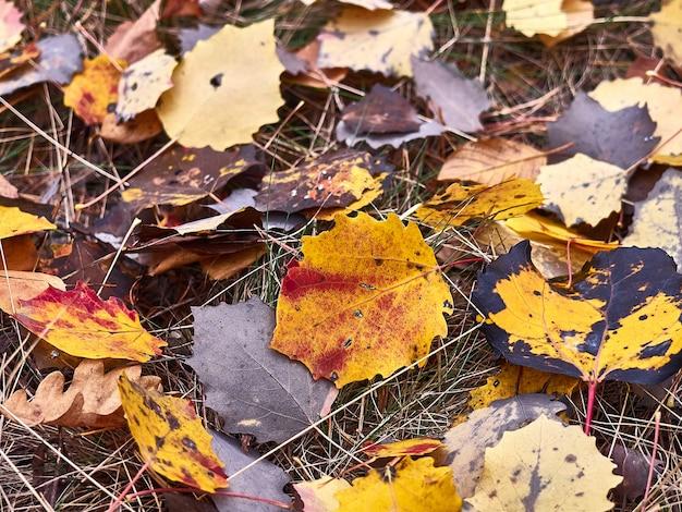 Foglia d'autunno sull'erba.