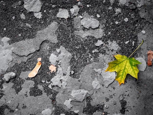 Foglia d'autunno su uno sfondo grigio.