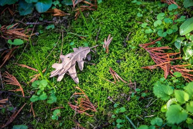 Foglia d'autunno sullo strato di muschio nella foresta