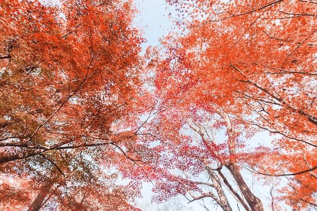 Natura foglia d'autunno
