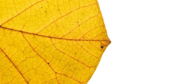 Primo piano di struttura della foglia di autunno con il formato dell'insegna delle vene con lo spazio della copia