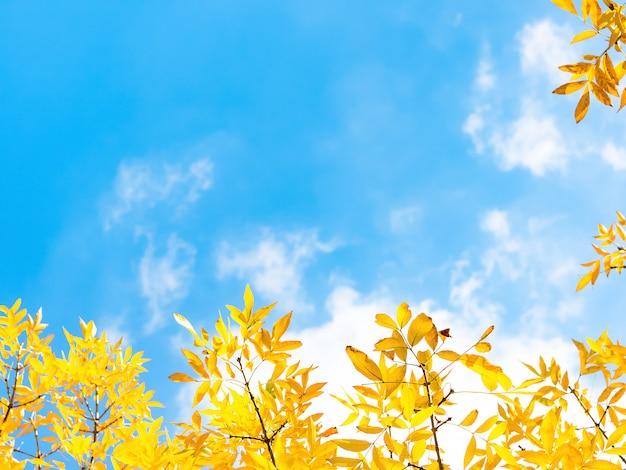Fogli di autunno contro cielo blu
