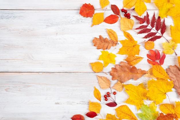 Le foglie d'autunno sono rosse e gialle su un vecchio fondo di legno bianco. il concetto di vacanza, studio.