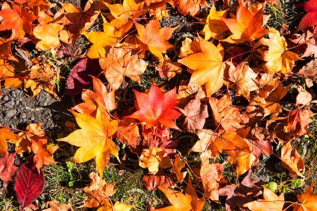 Foglie d'autunno sfondo, le foglie cambiano colore.