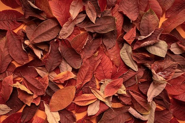 Sfondo di foglie di autunno, primo piano vista dall'alto.