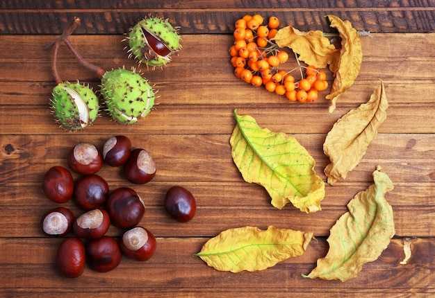 Foglie di autunno, castagne e sorba su fondo di legno. piante autunnali su fondo in legno.