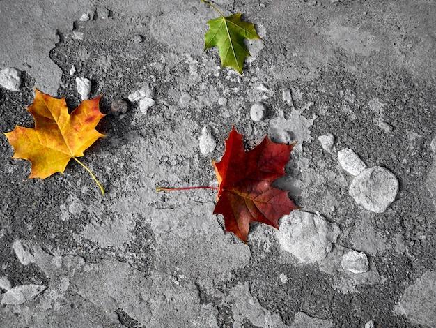 Foglie di autunno su uno sfondo grigio