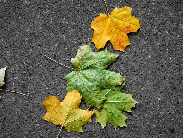 Foglie di autunno su cemento grigio