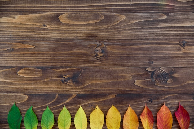 Le foglie di autunno presentate in una striscia passano dal verde al rosso su un fondo di legno