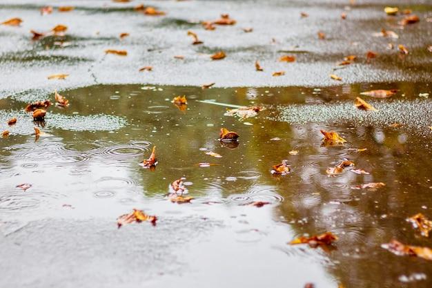 Foglie di autunno nella pozza d'acqua sull'asfalto durante la pioggia