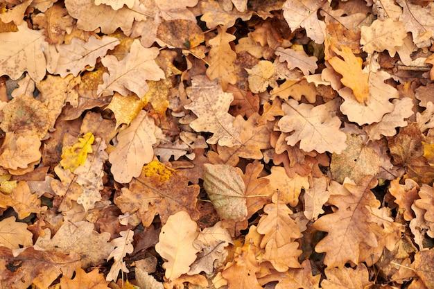 Foglie di autunno, vista dall'alto. fogliame caduto colorato. design pattern di sfondo per uso stagionale.