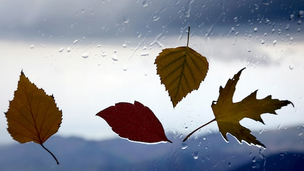 Foglie d'autunno su una finestra bagnata su uno sfondo di tempo piovoso