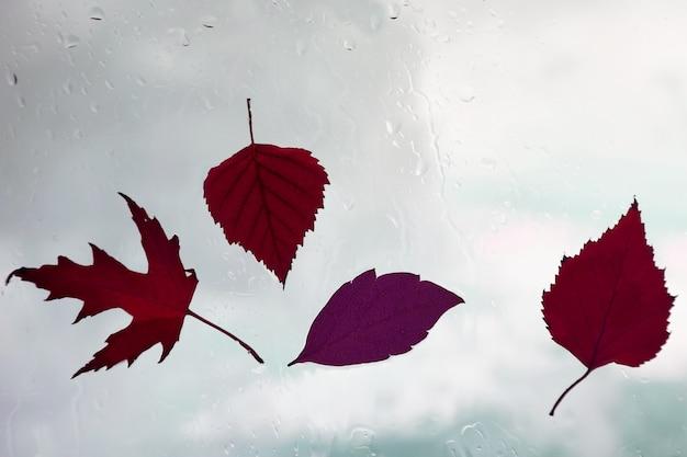 Foglie di autunno su una finestra bagnata su un tempo piovoso