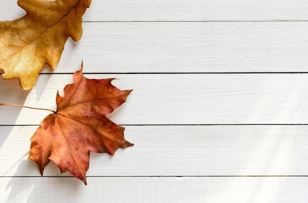 Foglie d'autunno su uno sfondo di lavagne bianche illuminate dalla vista dall'alto dei raggi solari